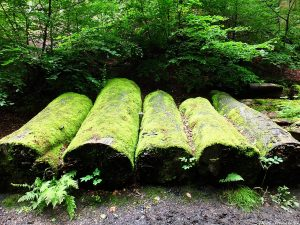 Blackford-Glen-logs