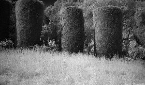 Braid_IR_topiary00