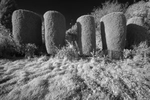 Braid_Meadow_topiary03ir