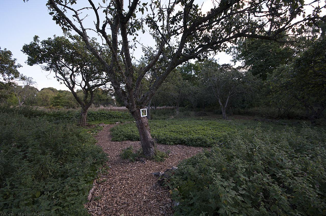 OrchardWalk34