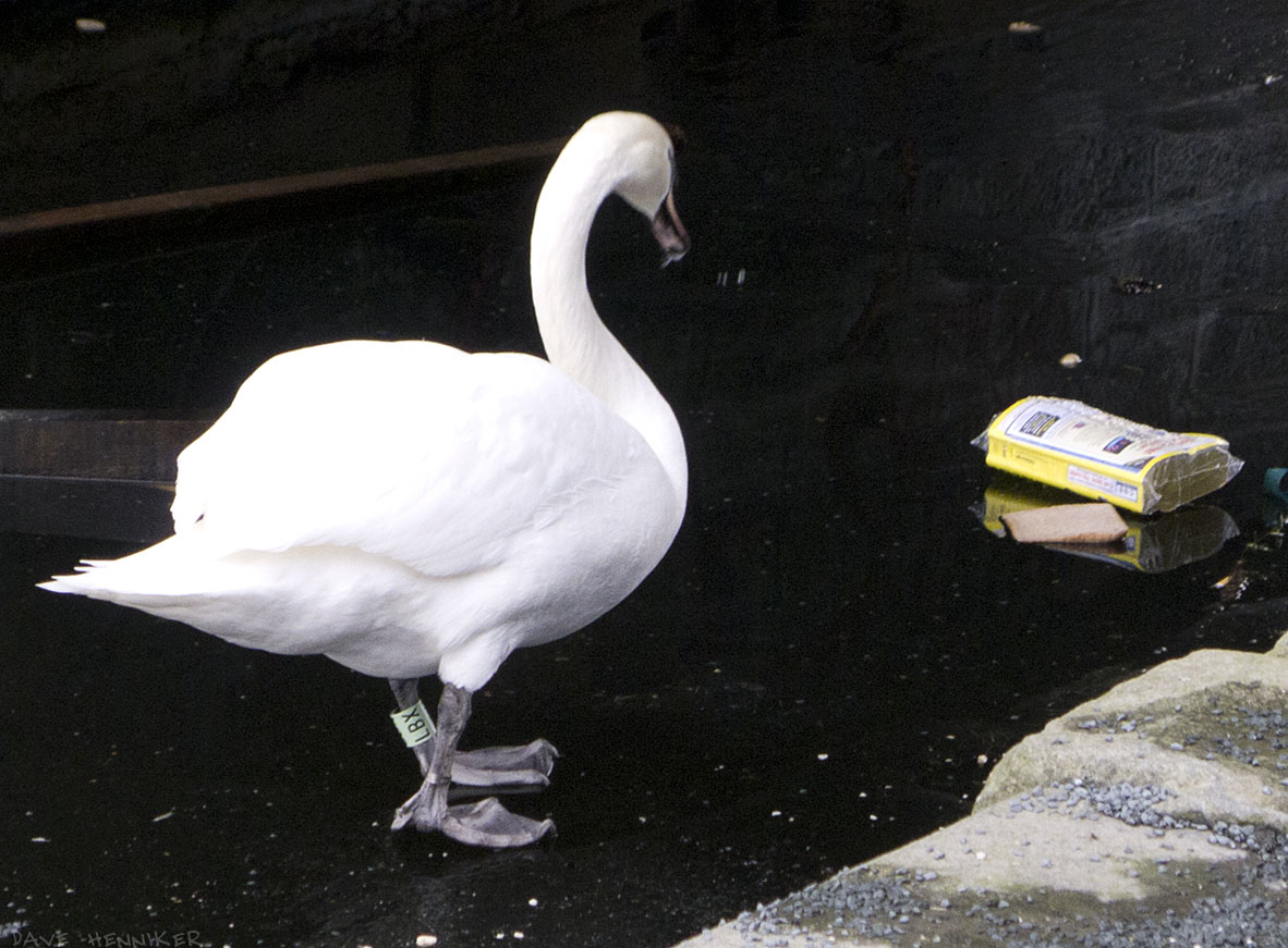 Viewforth-Swan00ice