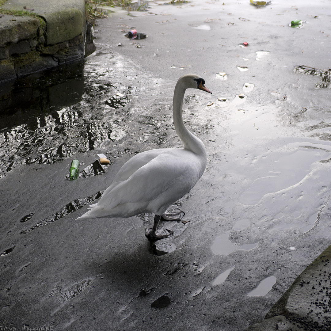 Viewforth-Swan03ice
