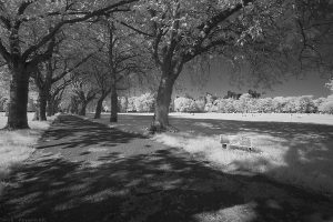 coronationwalk_IR03