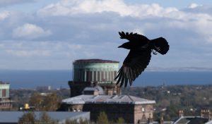 crow04