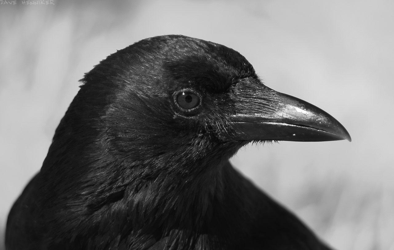 crow05ir