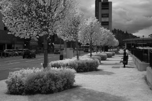 fountainpark13ir