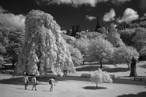 gardens_IR26