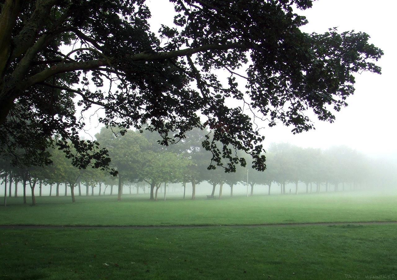 meadows38mist