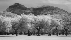meadows75ir1920