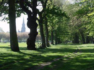Beside North Meadow Walk