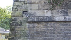 via-aqueduct2011i