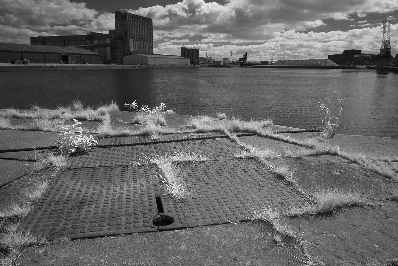 Further west along Albert Dock I noticed grass and weeds growing in cracks, ideal for infrared photography. (The cranes referred to above are at top right of this picture.)