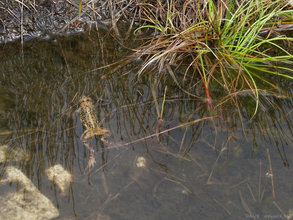Beinn_Eighe99v_amphibian1.jpg