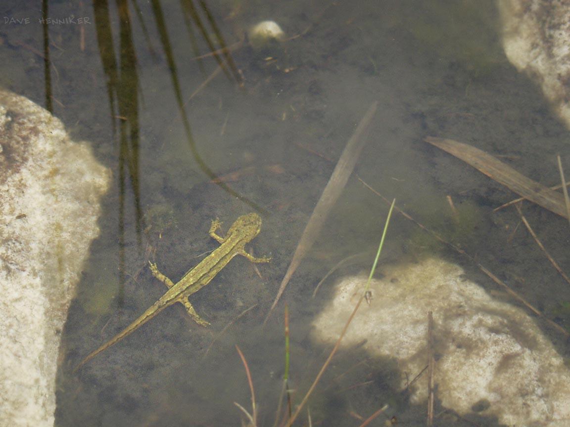 Beinn_Eighe99v_amphibian3.jpg