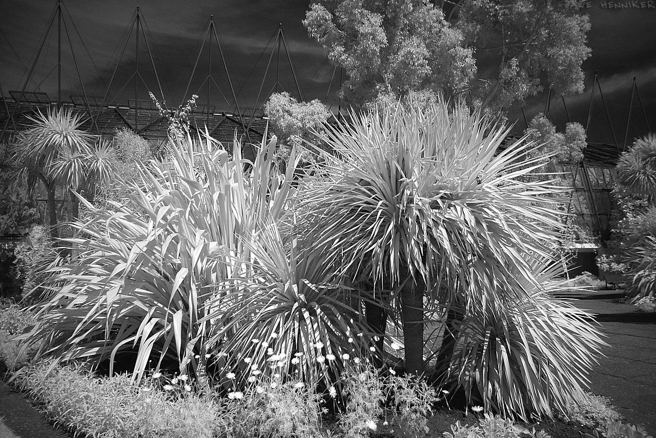 Botanic12