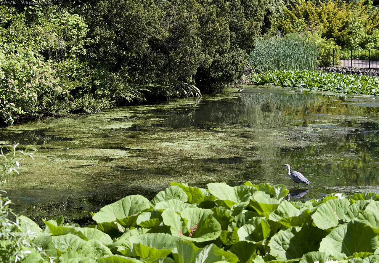 Botanic_03pond