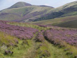 Harehill_path