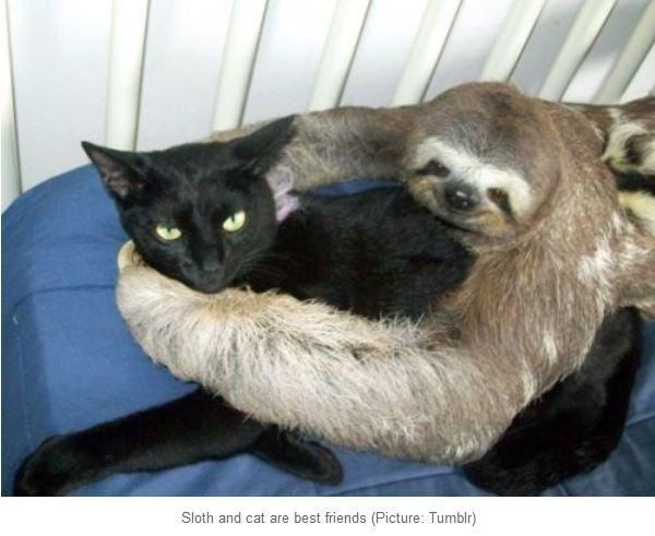 SlothCat