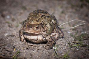 Toads3