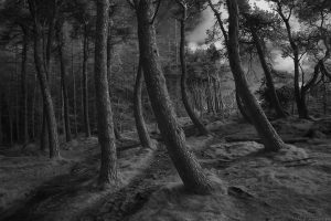 Torduff_path10ScotsPines_ir