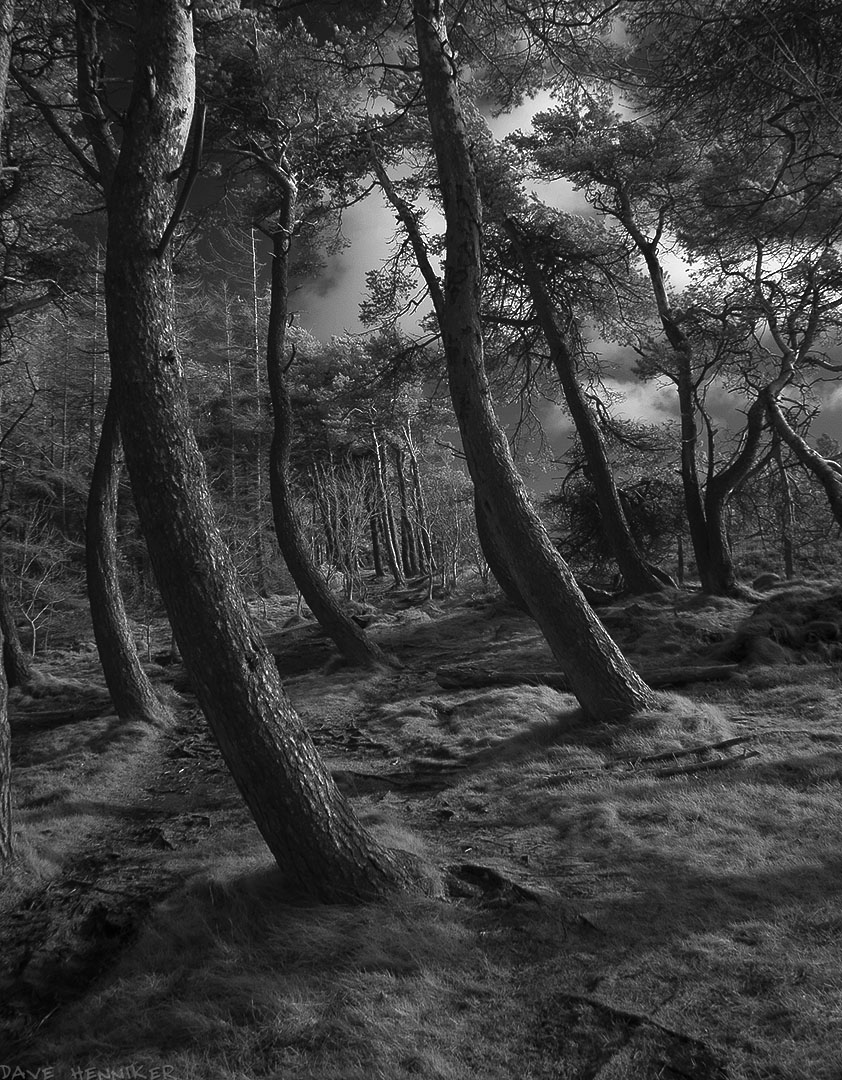 Torduff_path11ScotsPines_ir