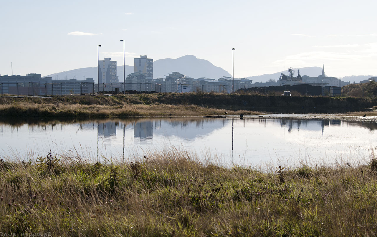 Nature will soon colonise these flooded areas if developers don't.