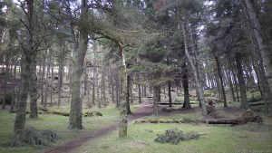 WhitehillTrees09