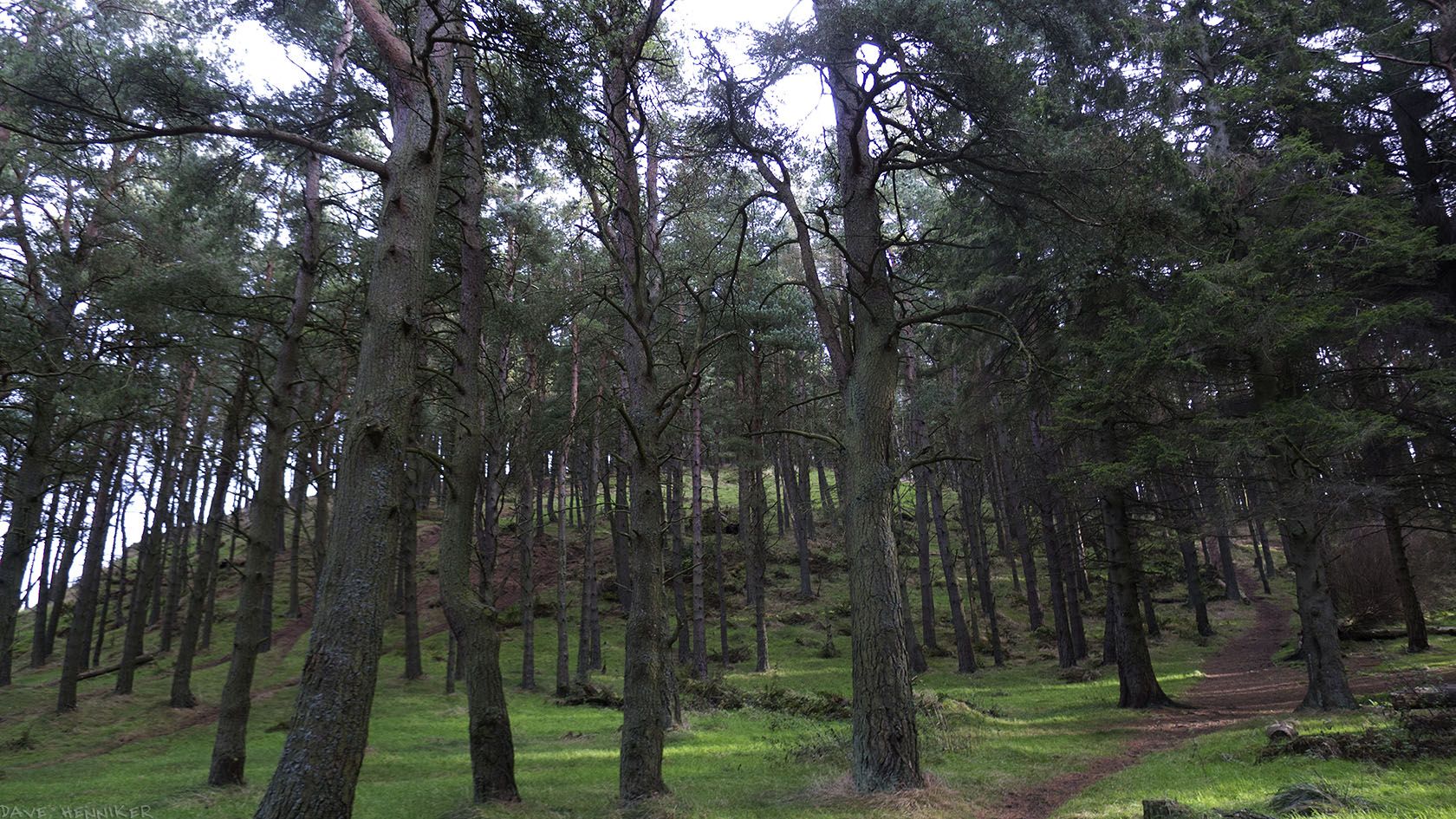 WhitehillTrees13