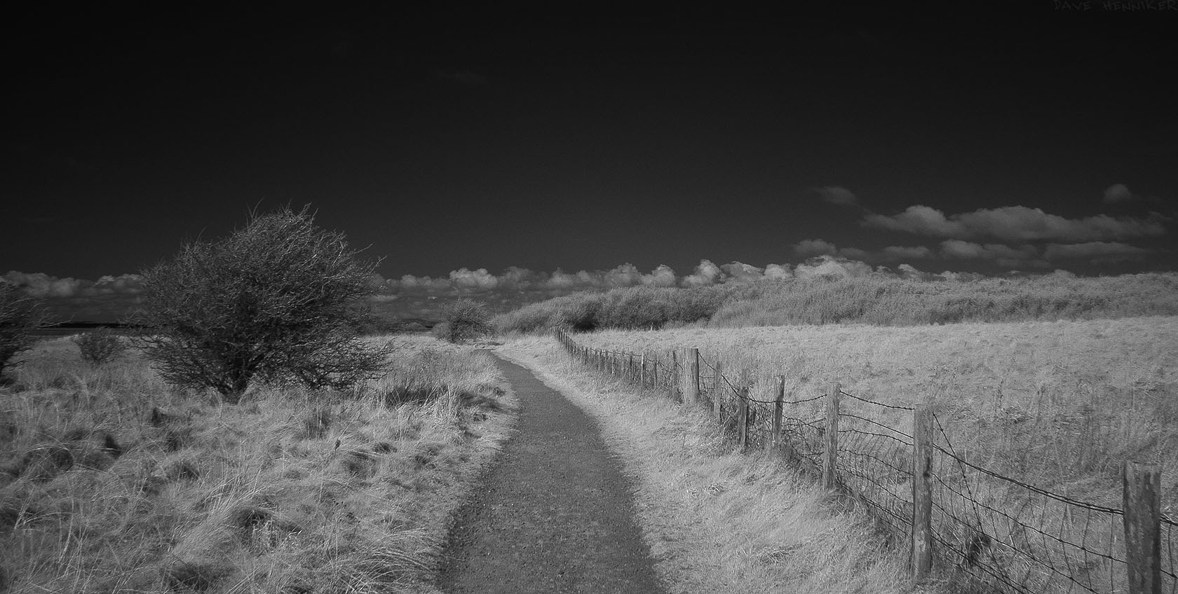 aberlady_bay_pathIR01
