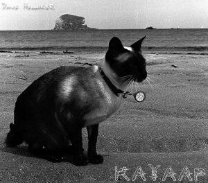 beach_cat2
