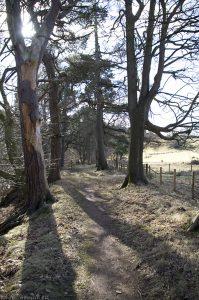 bilston-roslin-path08