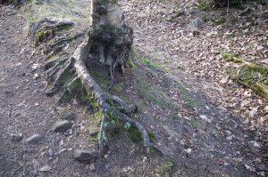 bilston-roslin-path11