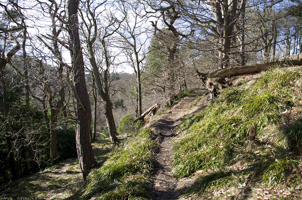 bilston-roslin-path14