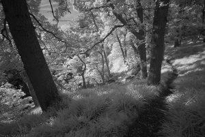 bilston-roslin-path_ir09