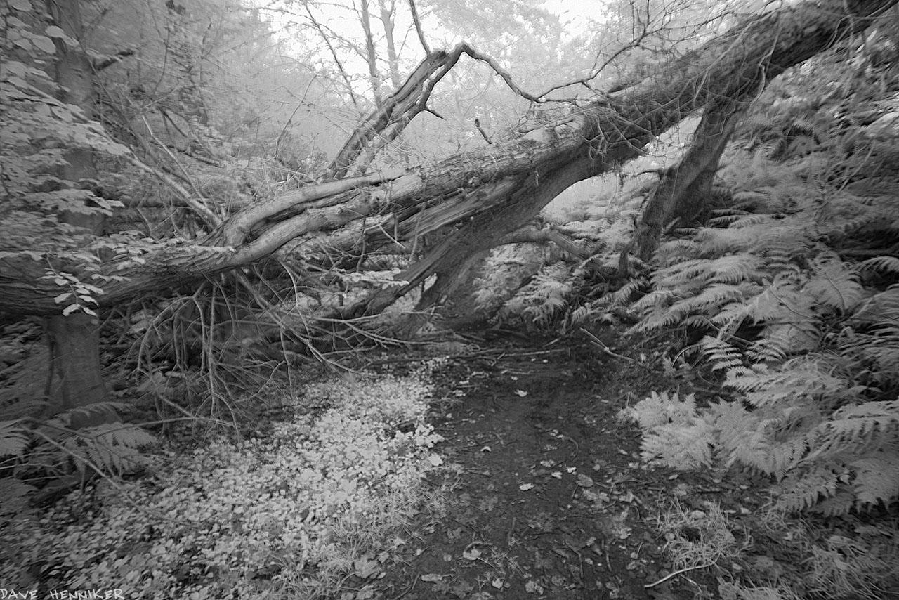 bilston-roslin-path_ir12