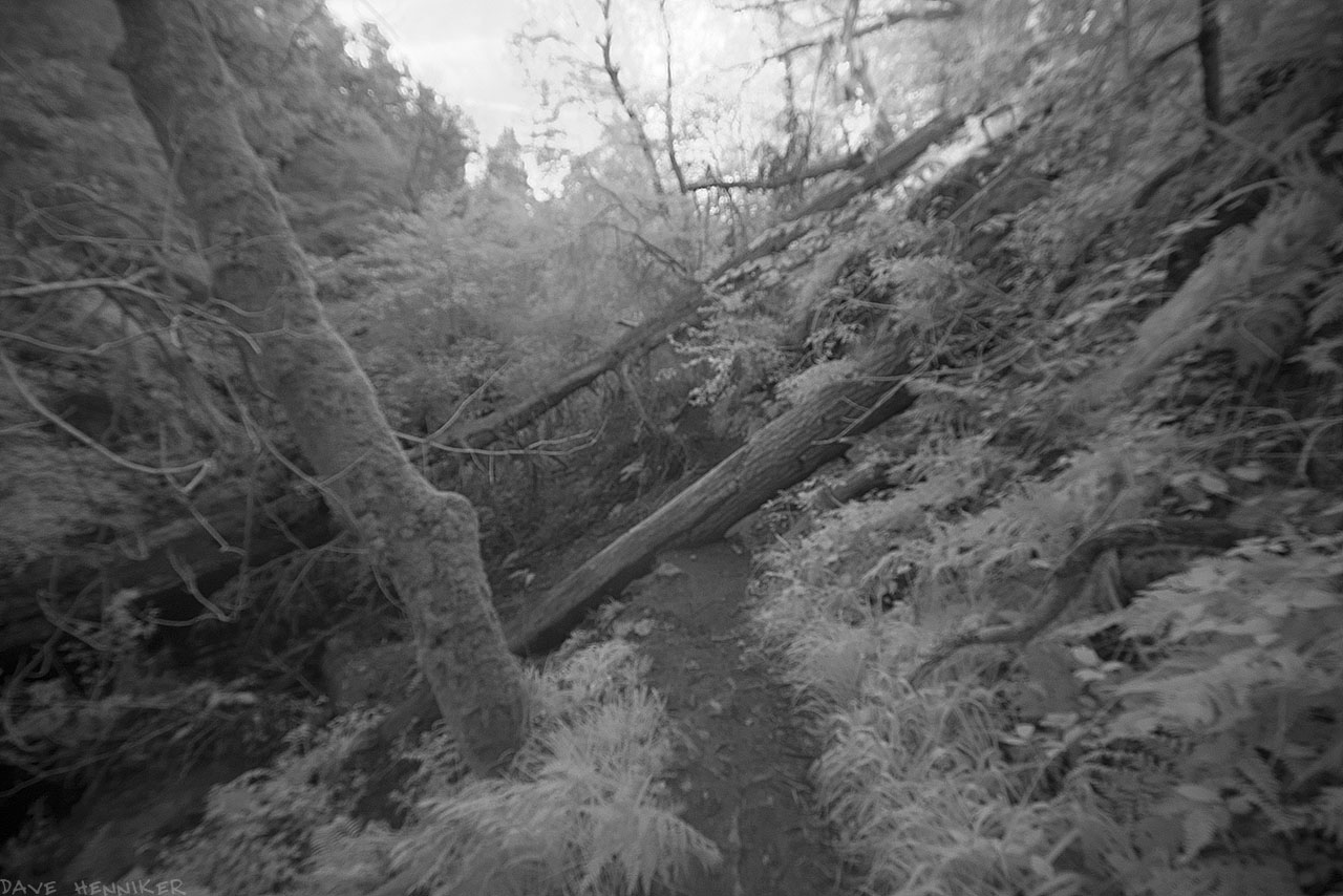 bilston-roslin-path_ir23