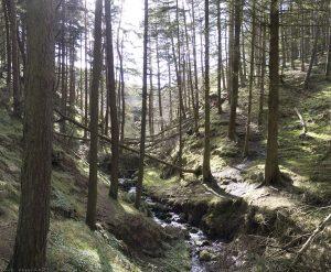 bonaly-woods-mar11b