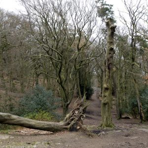 corstorphine_hill20