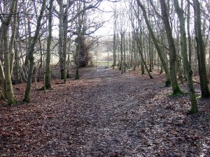 Covenanters Wood