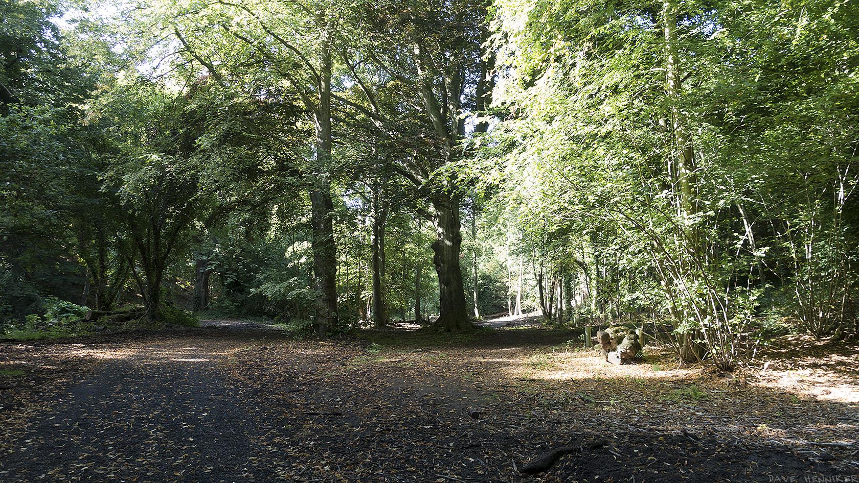 covenanter_woods2015d