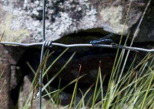 dragonflies00