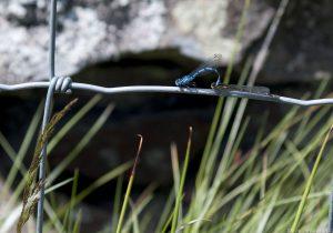 dragonflies01