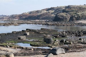 gullane_bay2014_16