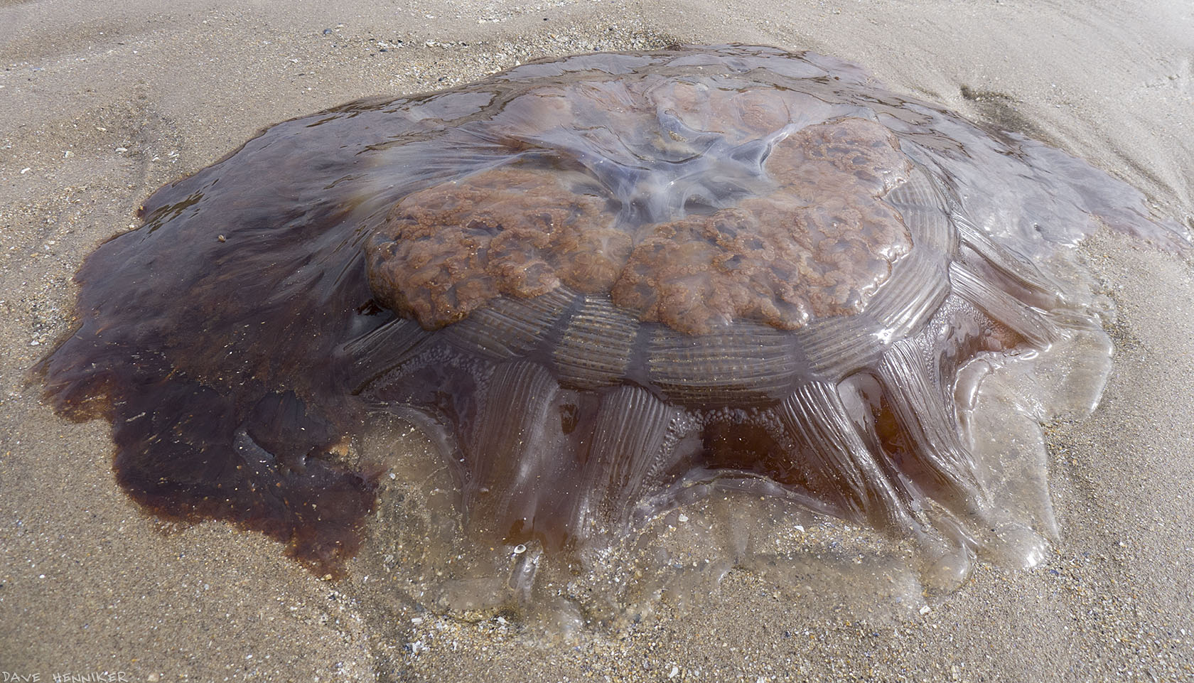 jellyfish02