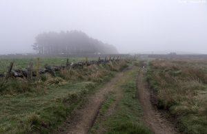 kirk-rd24start-mist