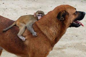 monkeydogEPA_450x300
