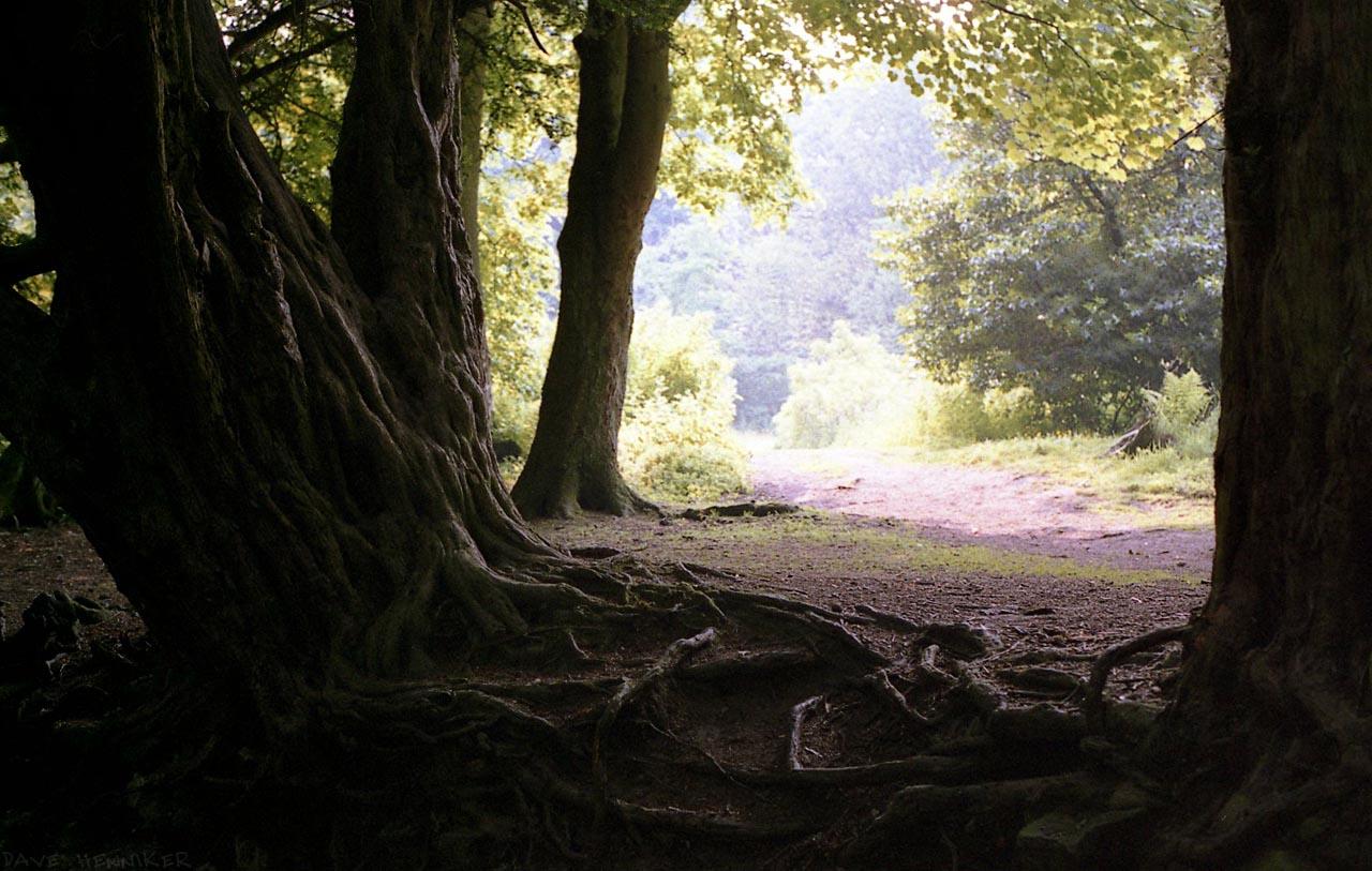 roslin_glen_trees00