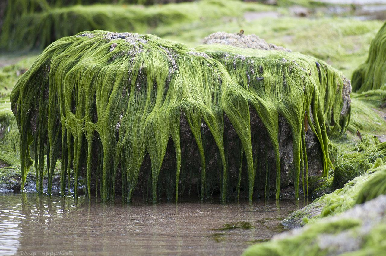 seaweed03