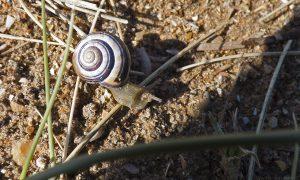 snail03