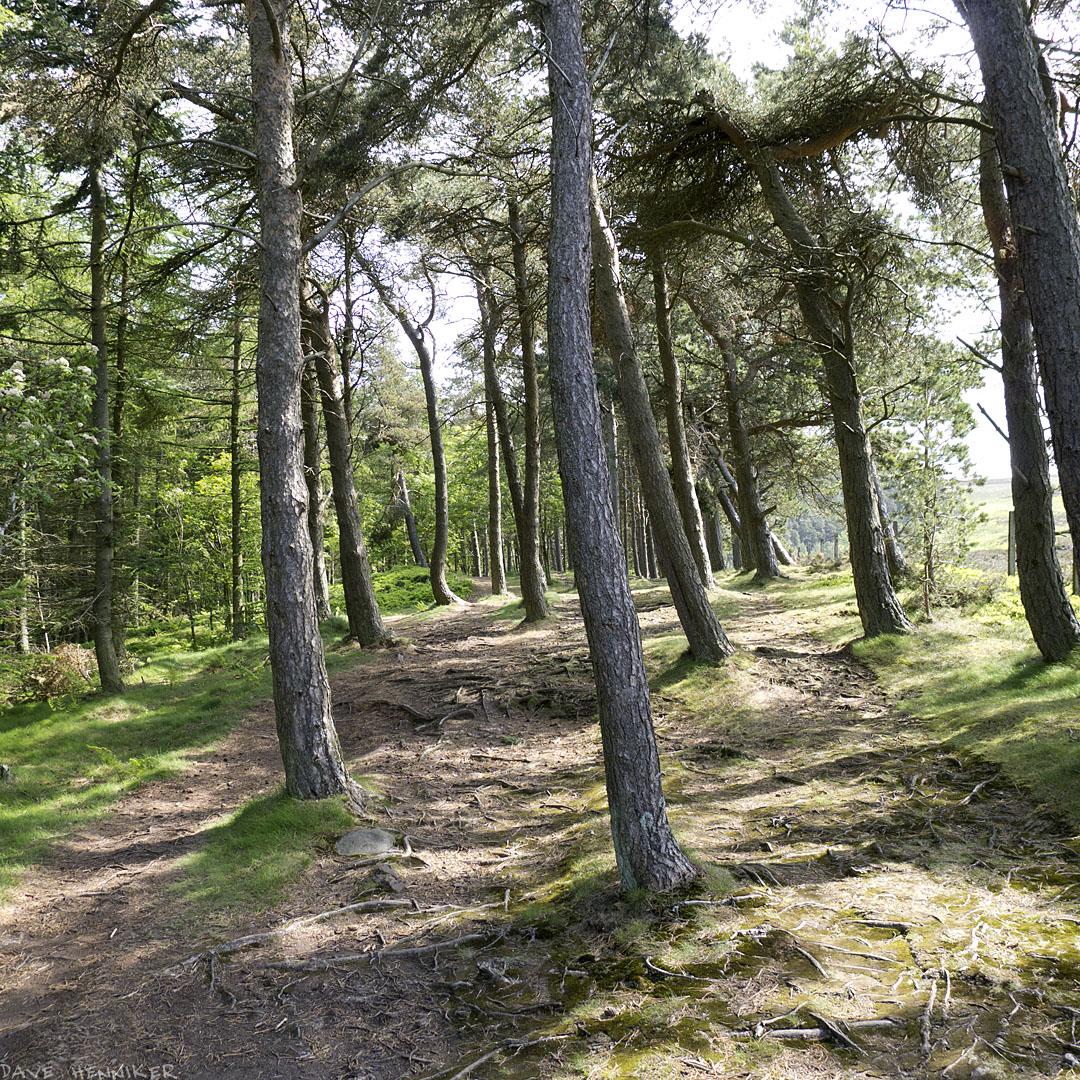 torduff_path_woods2bonaly